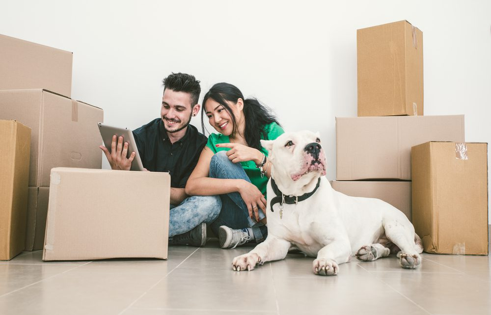 Moving to a New House With a Dog