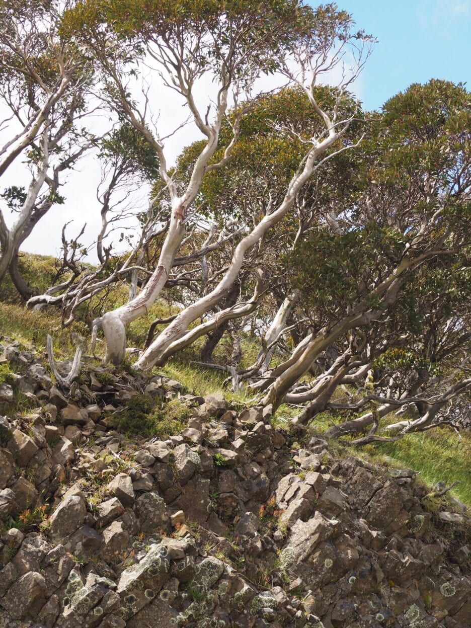 Mt Hotham Village Trails, Victoria