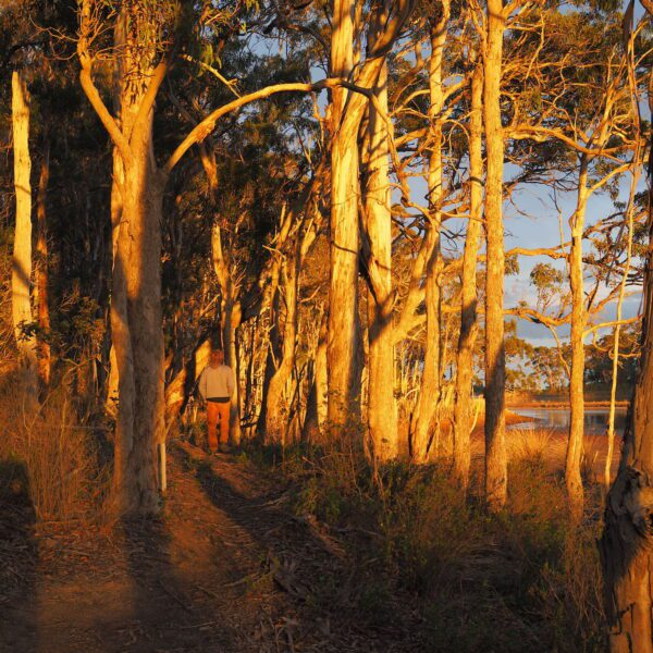 Middle Lagoon Circuit, New South Wales walk