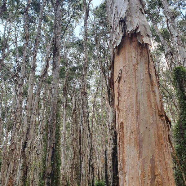 Paperbark Walk, Queensland